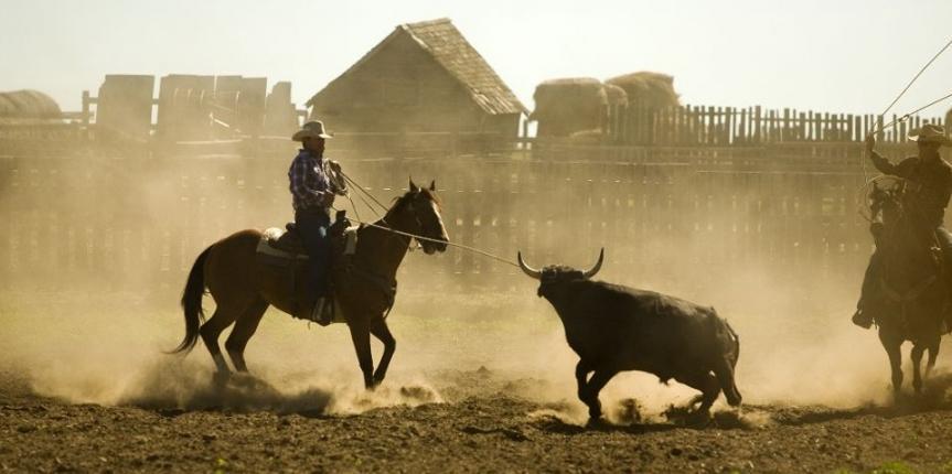 Bo på ranch